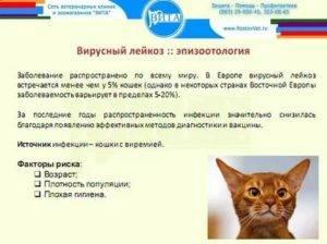 Иммунодефицит кошек. симптомы, диагностика, лечение fiv у кошек