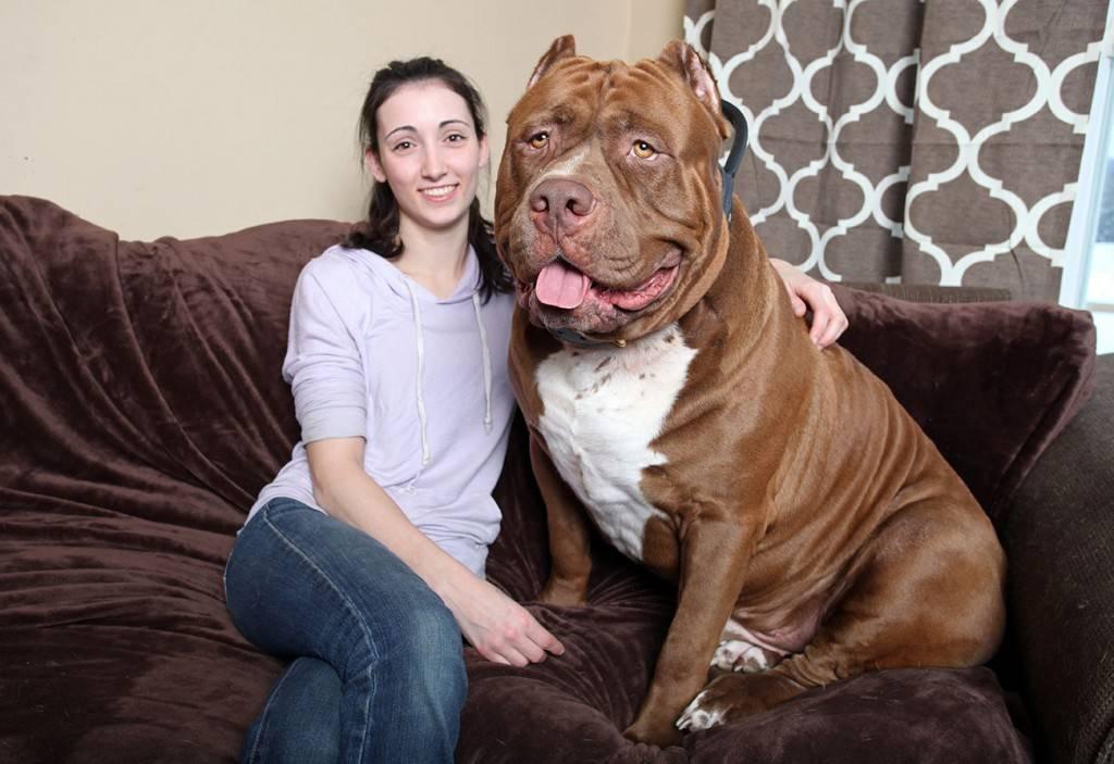 Топ самых больших пород собак в мире с названиями и фото