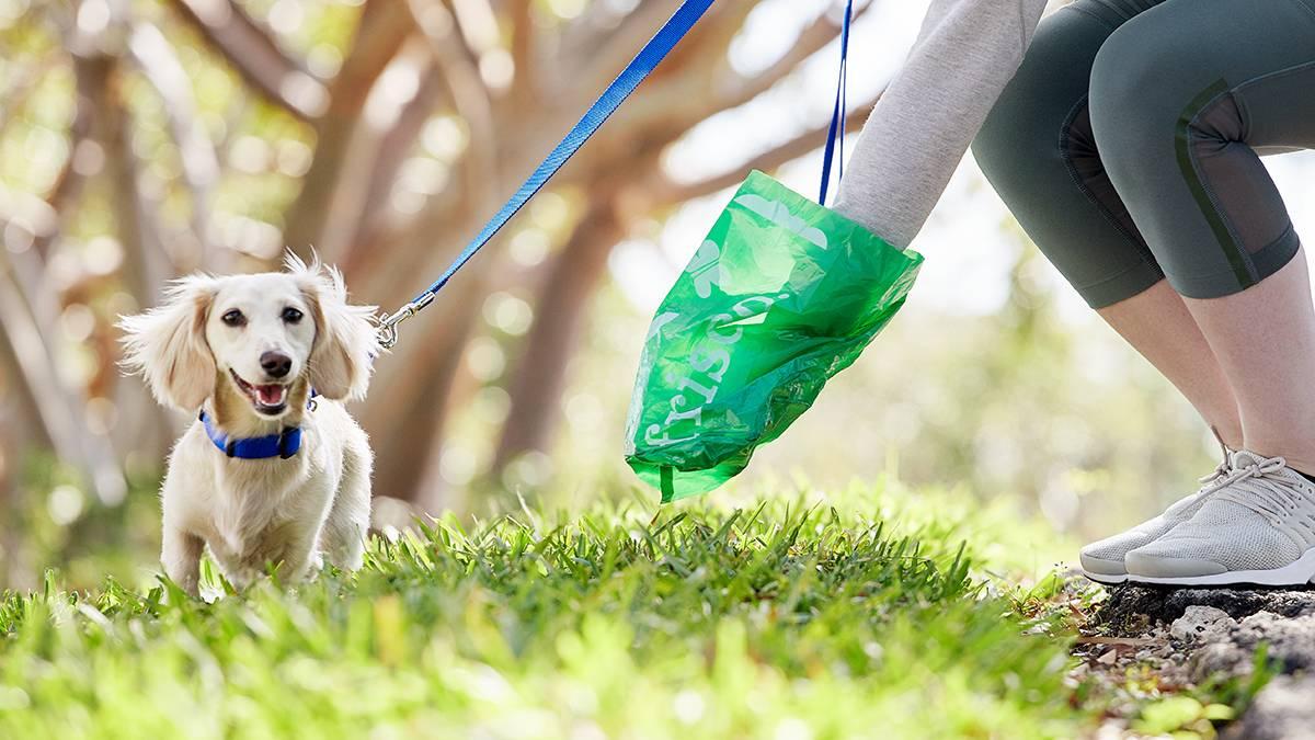 Стоит ли брать собаку с собой в отпуск?