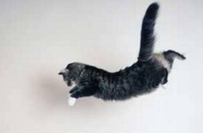 Последствия падения кота с 4, 5, 8 или даже 14 этажа: что нужно сделать