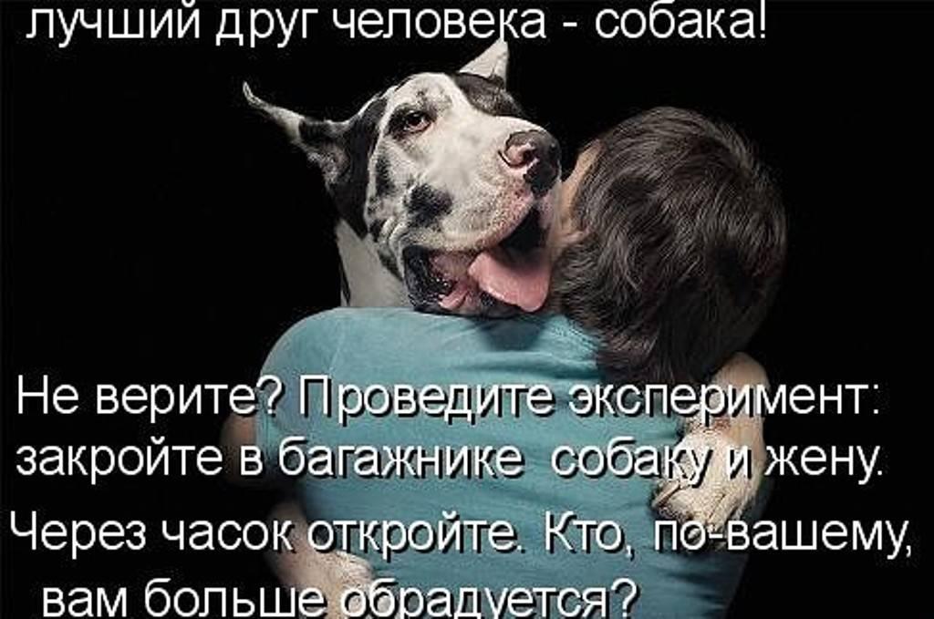 Собака скулит когда ее гладят. почему собака скулит и как быть? причины, почему собака скулит