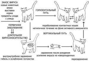 Чем кормить беременную кошку: советы по планированию рациона