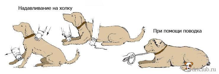 """Как научить собаку команде """"лежать"""", способы дрессировки"""