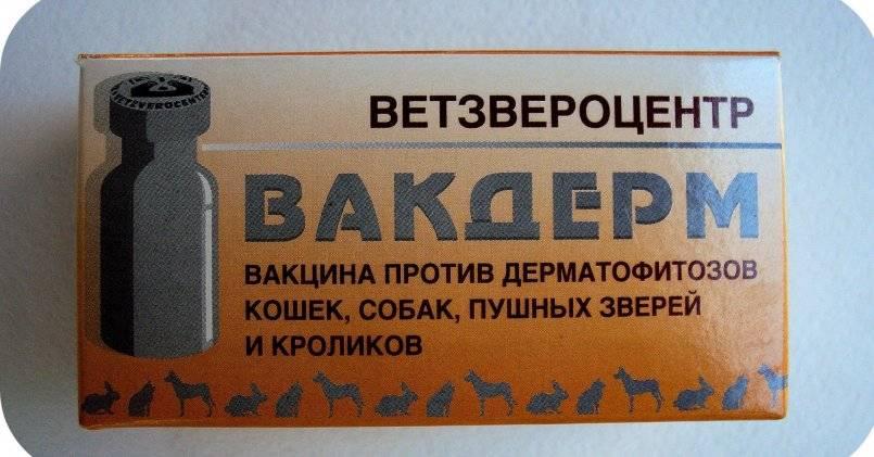 Инструкция по применению вакдерм: вакцинация кошек и собак