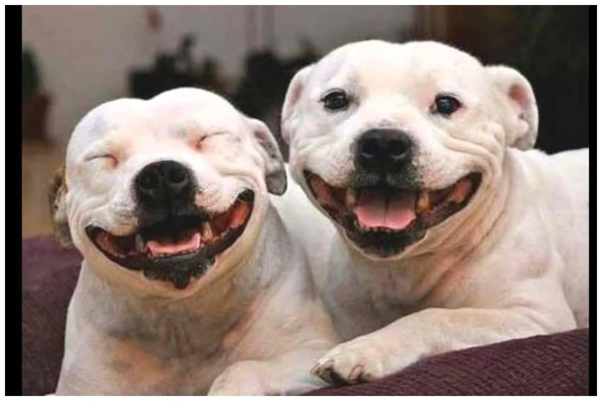 Умеют ли собаки и кошки смеяться | gafki.ru | яндекс дзен