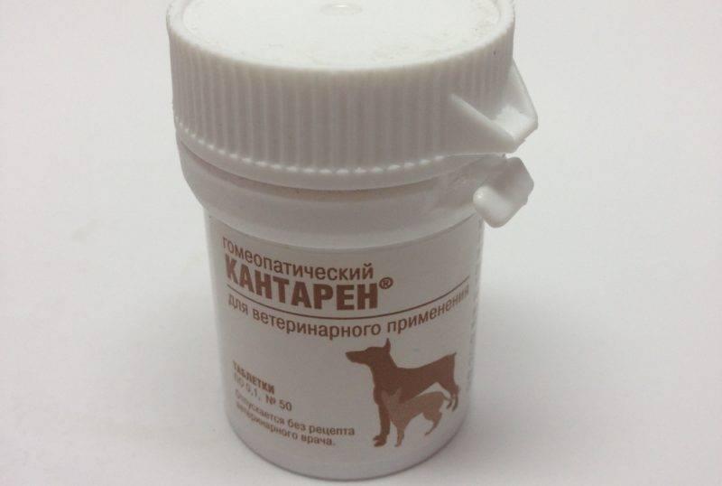 Кантарен для собак: показания и инструкция по применению, отзывы, цена