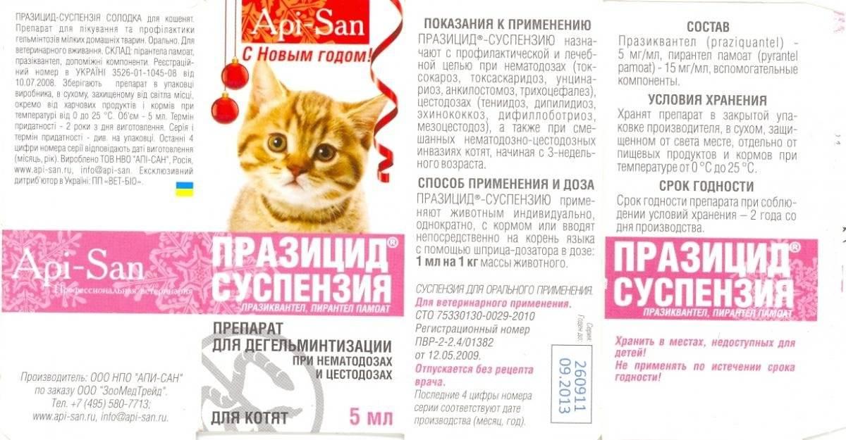 За сколько дней до прививки нужно глистогонить кошку?