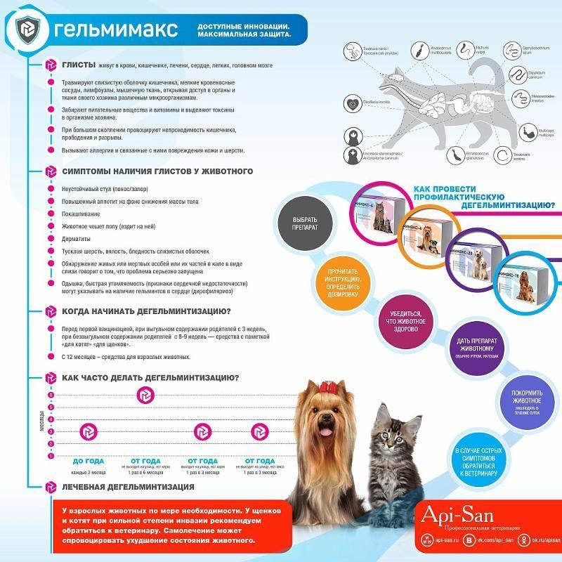 Алиментный щенок: что это значит? правила вязки и прочие нюансы