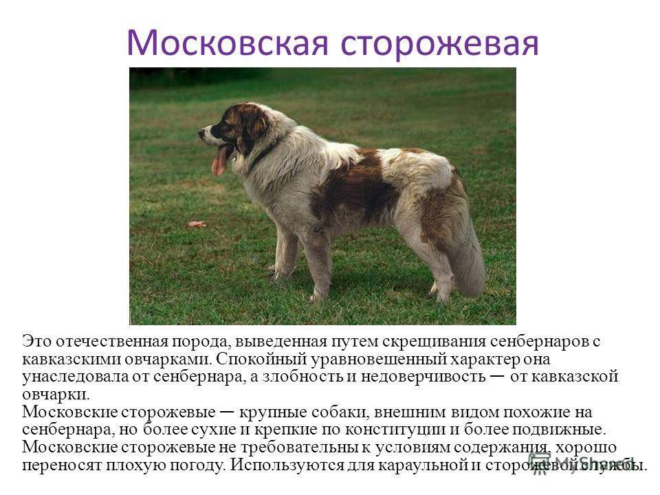 Виды скрещивания собак - зоо мир