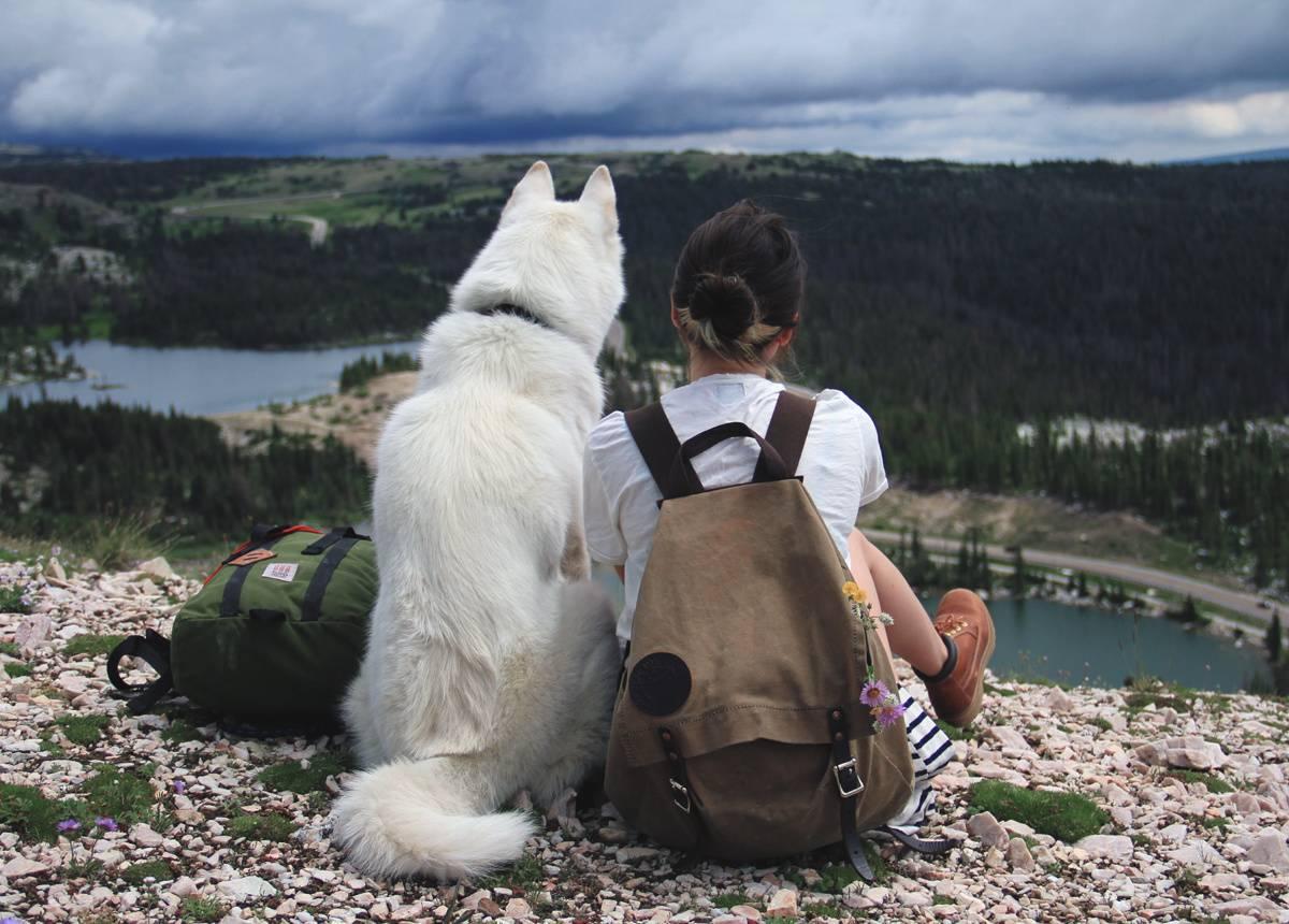 Самые послушные породы собак, с которыми можно путешествовать