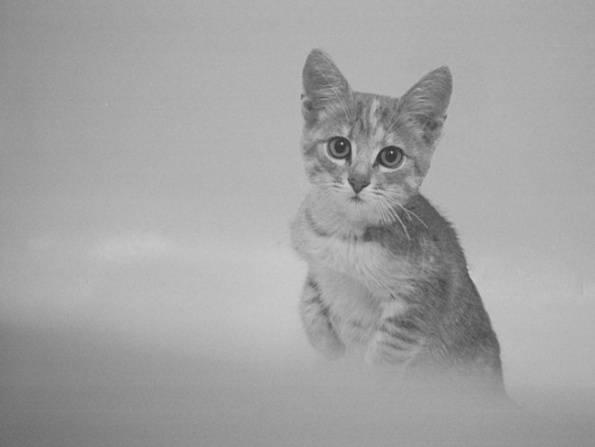 Есть ли память у кошек и как она устроена, сколько времени коты помнят события и людей?
