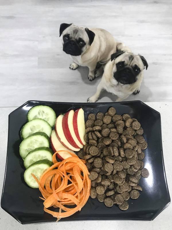 Чем кормить щенка и взрослого мопса?