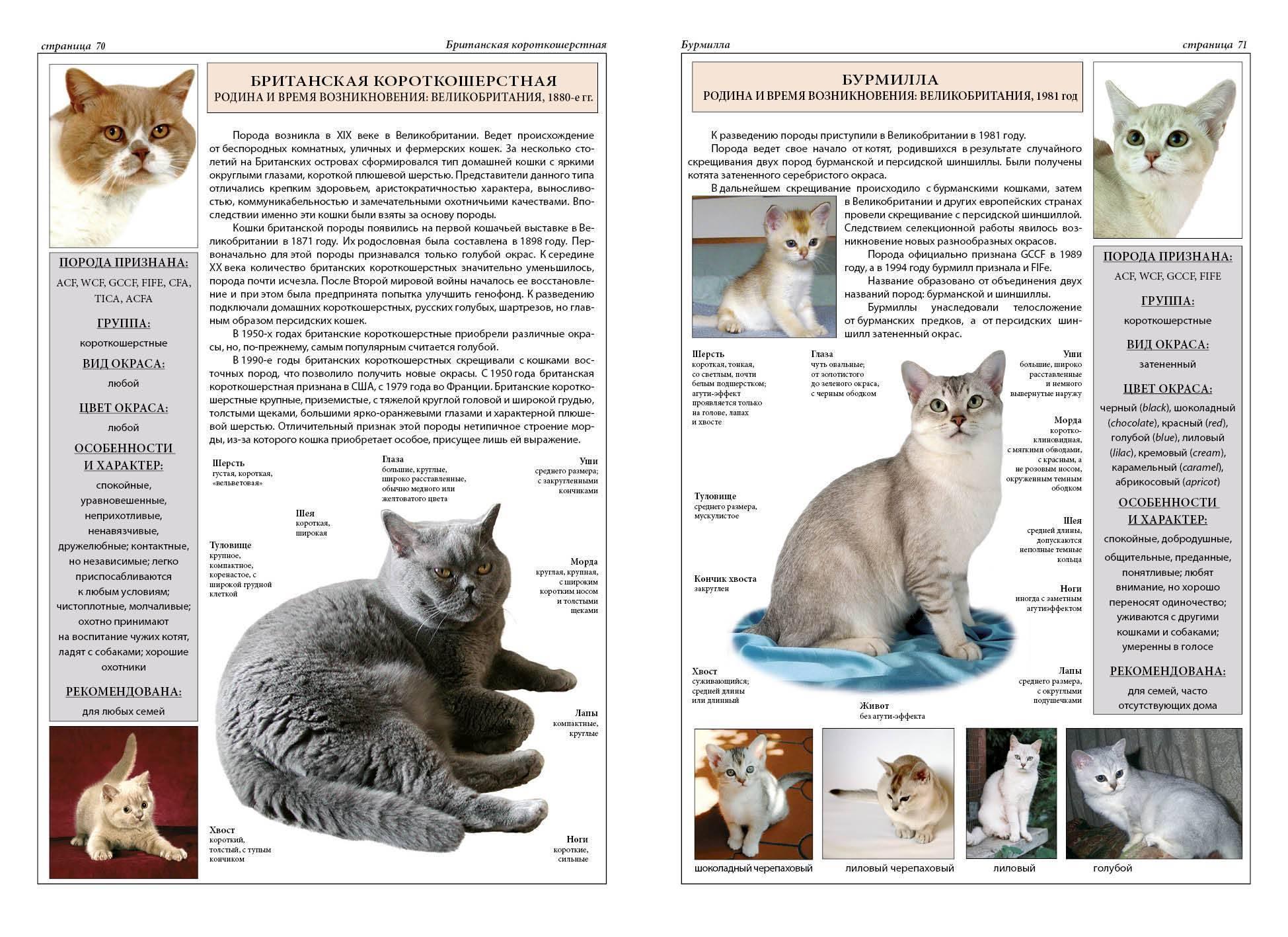 Канадский сфинкс - фото, описание породы и характера, отличия от донского