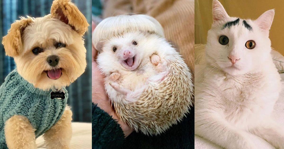Звезды инстаграма: самые популярные животные в сети