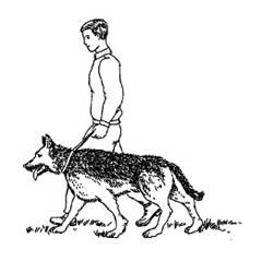 Как приручить собаку к новому хозяину или наладить контакт с уличным бродягой