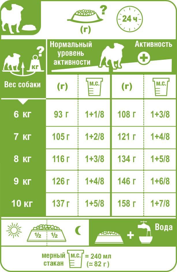 Чем кормить мопса: рацион питания щенков и взрослых собак