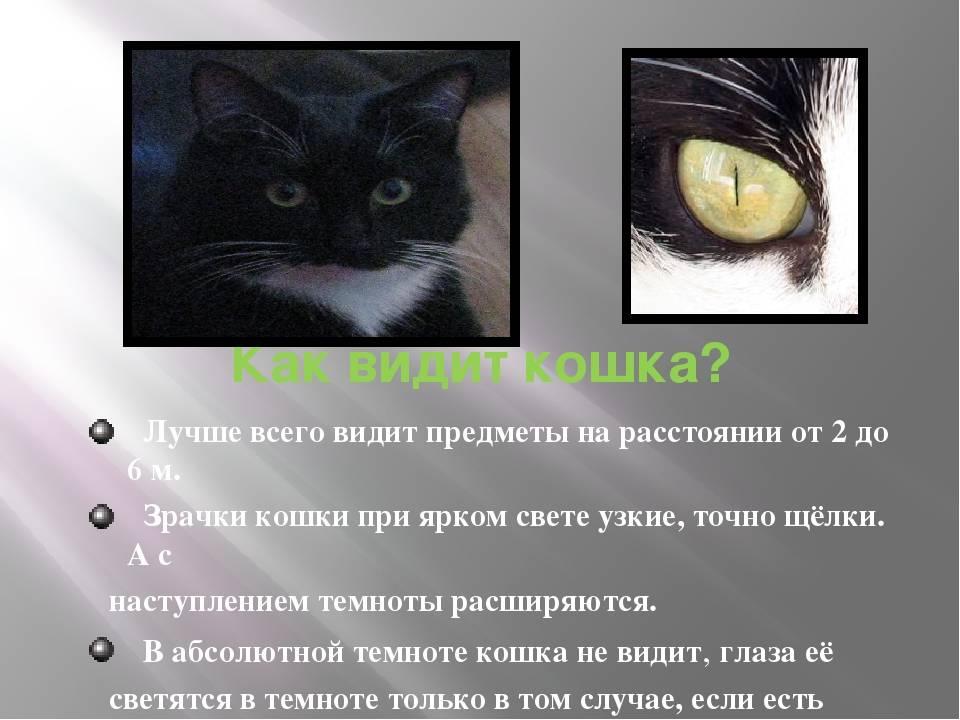 Как кошки видят наш мир, в каких цветах, почему кошки видят в темноте