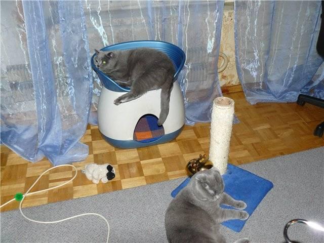 Как отучить кота метить в квартире территорию?