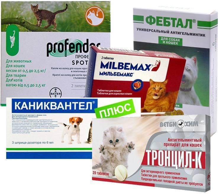 Таблетки и другие средства от глистов у кошек: особенности применения известных препаратов