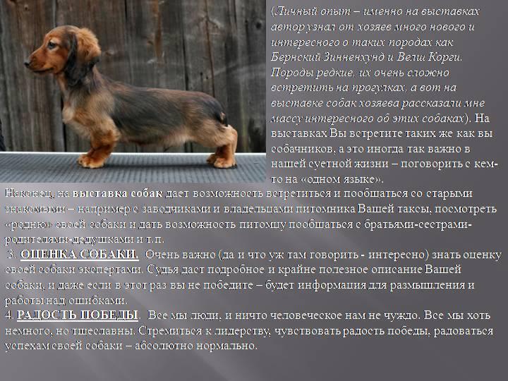 Содержание таксы в доме и квартире. как ухаживать за собакой?