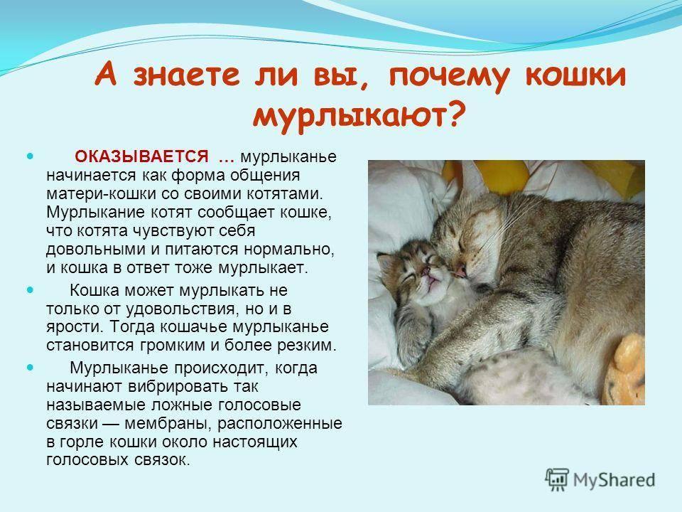 Самые интересные факты о котах и кошках: это стыдно не знать!