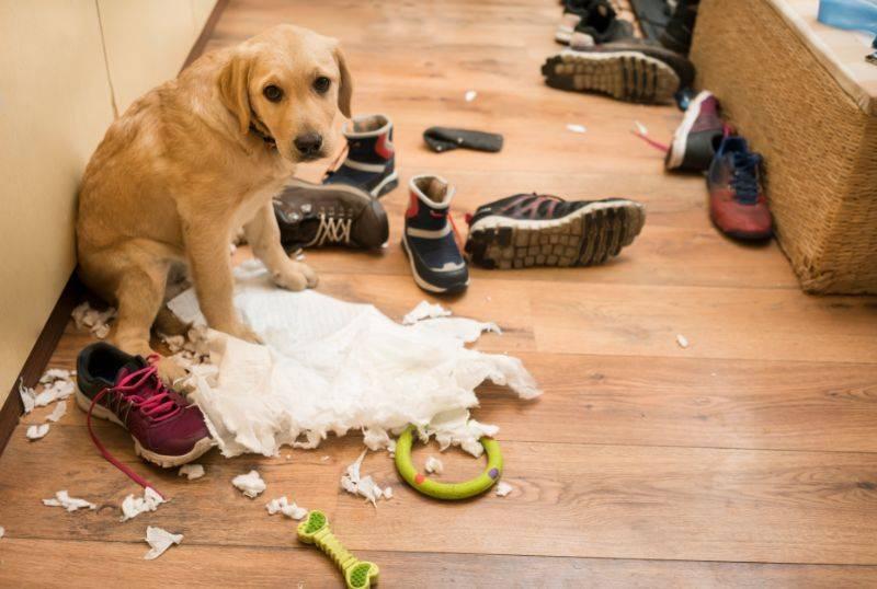 Как наказывать собаку: правильные методы воспитания