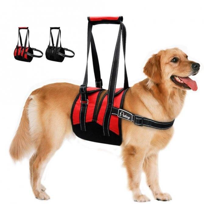 Шлейка для собак своими руками: выкройки, пошаговая инструкция, как сшить в домашних условиях