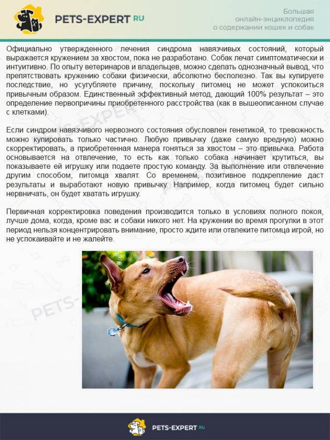 Что делать если укусила собака: симптомы, первая помощь, лечение