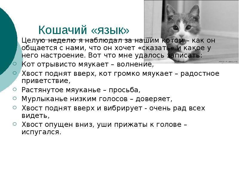 Понимают ли кошки человеческую речь и как это выражается?