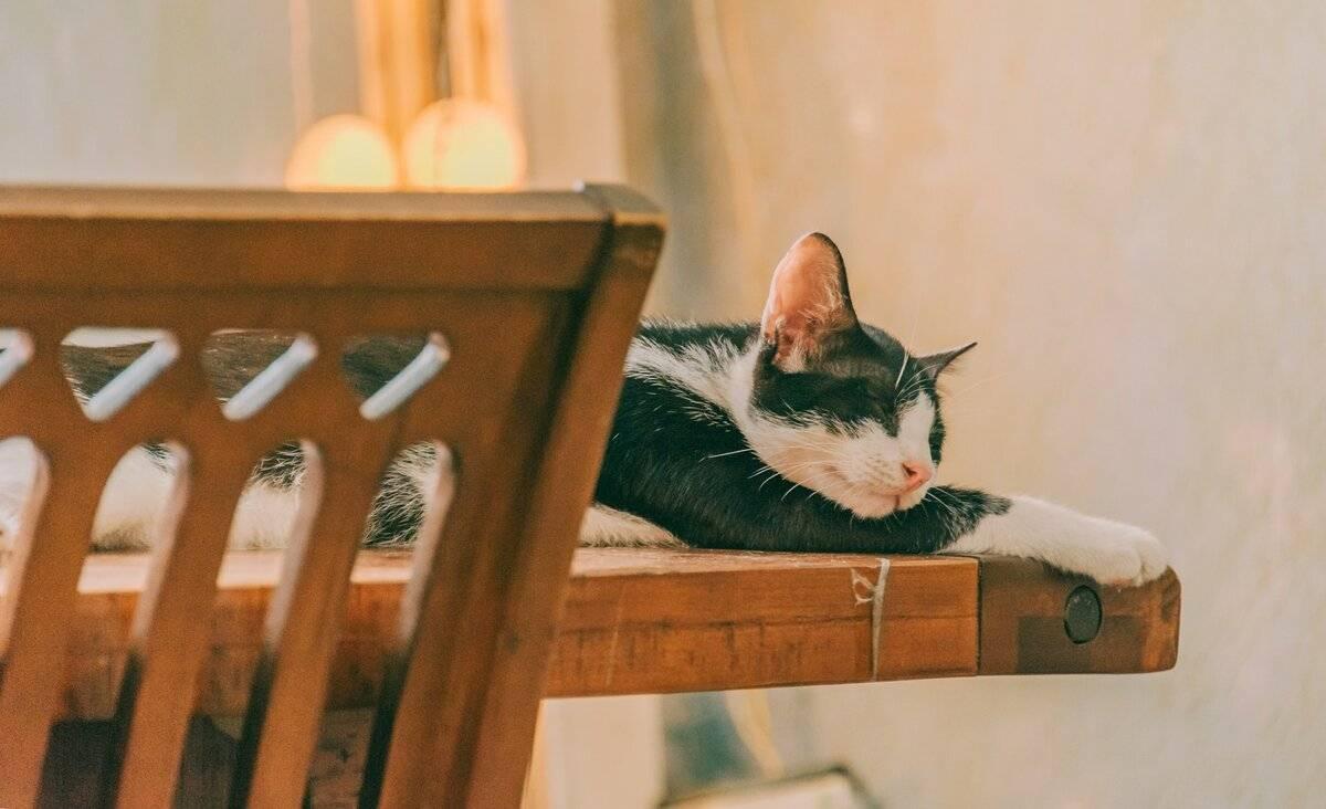Стоп-кот: как отучить питомца лазить на стол
