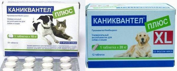 Квантум для кошек: отзывы, инструкция по применению, цена