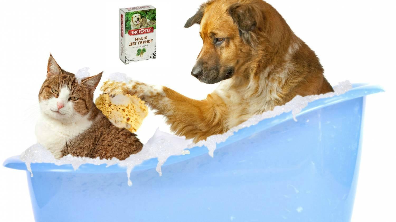 Можно ли мыть котенка: новорожденного, маленького, в 1, 2, 3 месяца, дегтярным, детским или хозяйственным мылом?