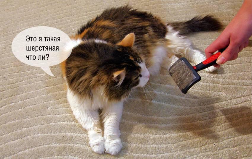 Что делать если кошка сильно линяет?