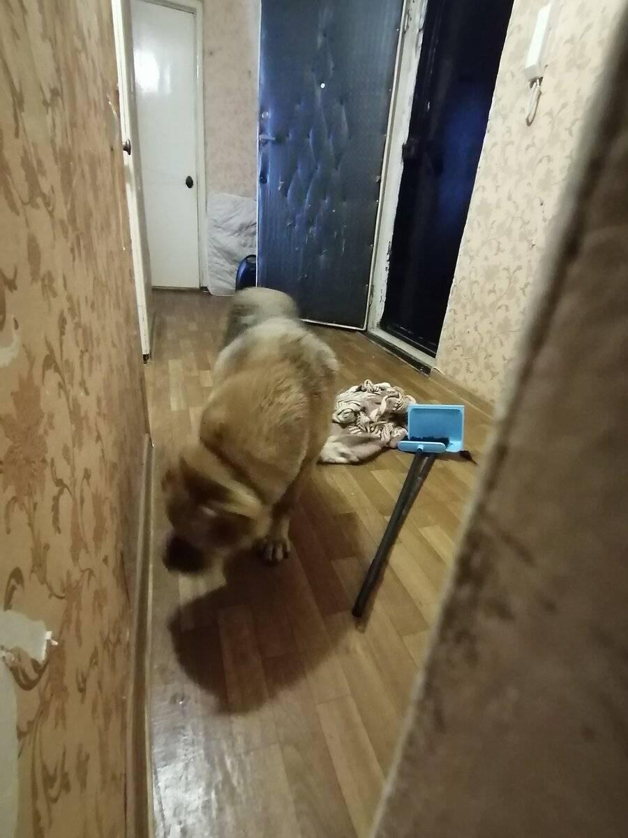 15 лучших сторожевых пород собак для охраны частного дома