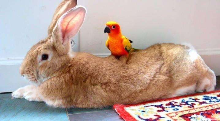 Как называть кролика мальчика и девочку: список кличек