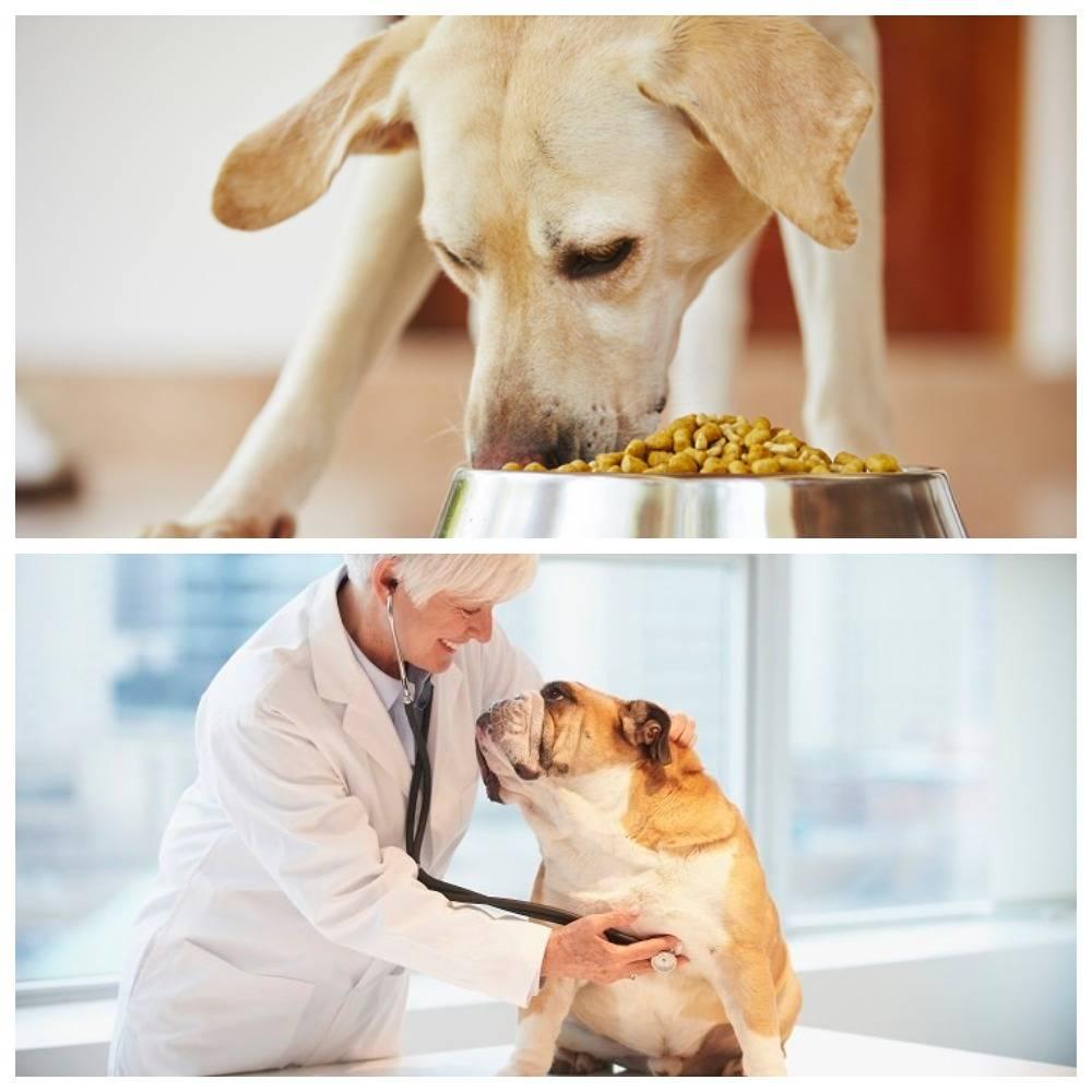 Панкреатит у кошки: лечение и уход в домашних условиях