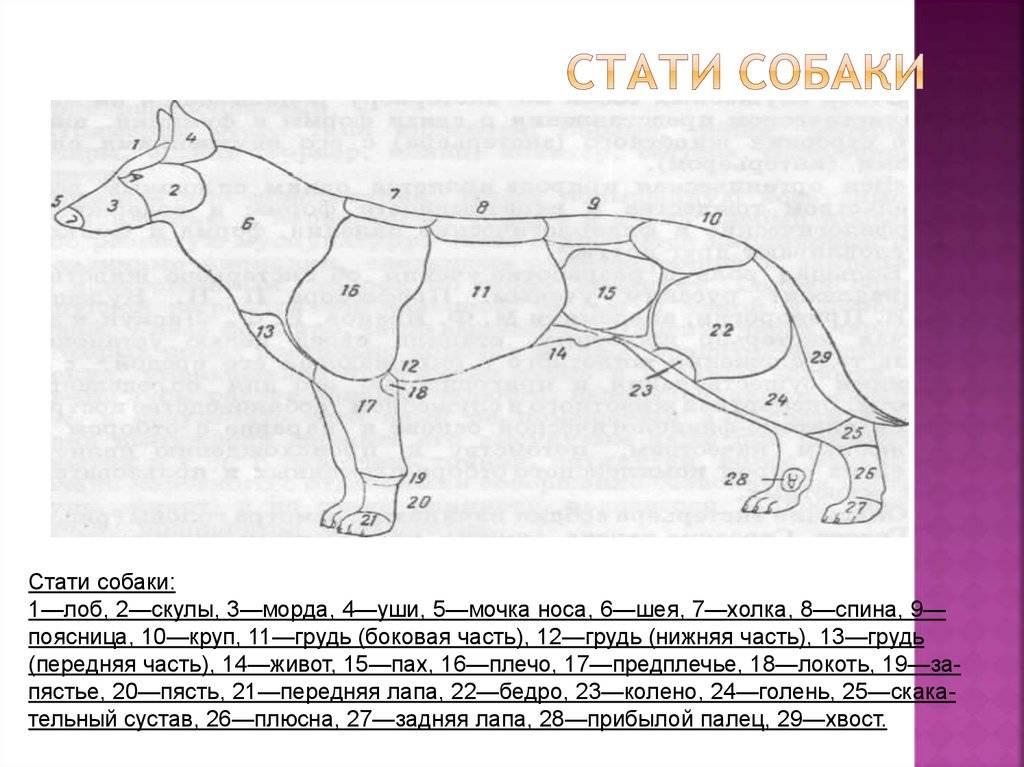 Где находится холка у кошки – особенности строения и использования этой части тела животного