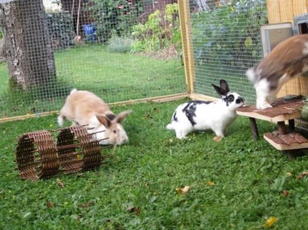 Разведение кроликов: особенности и основные правила содержания — cельхозпортал
