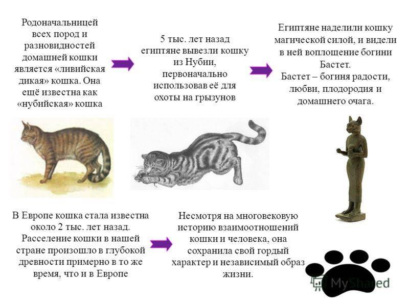 Кошачий характер
