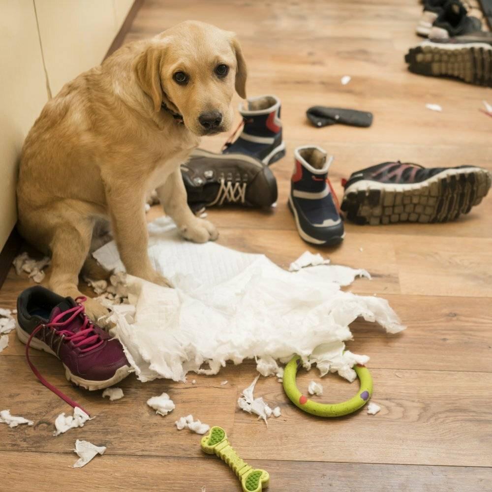 Почему собаки валяются в тухлятине и экскрементах