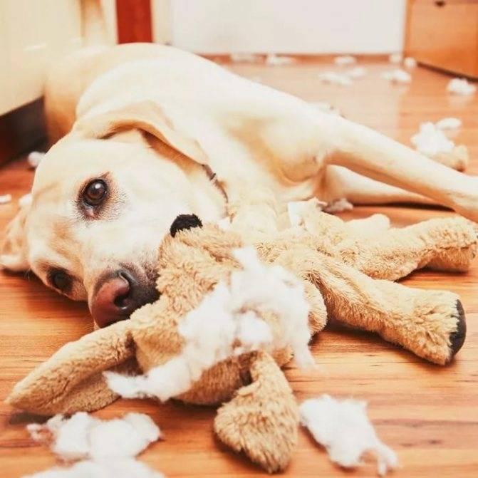 3 лайфхака как отучить собаку грызть вещи