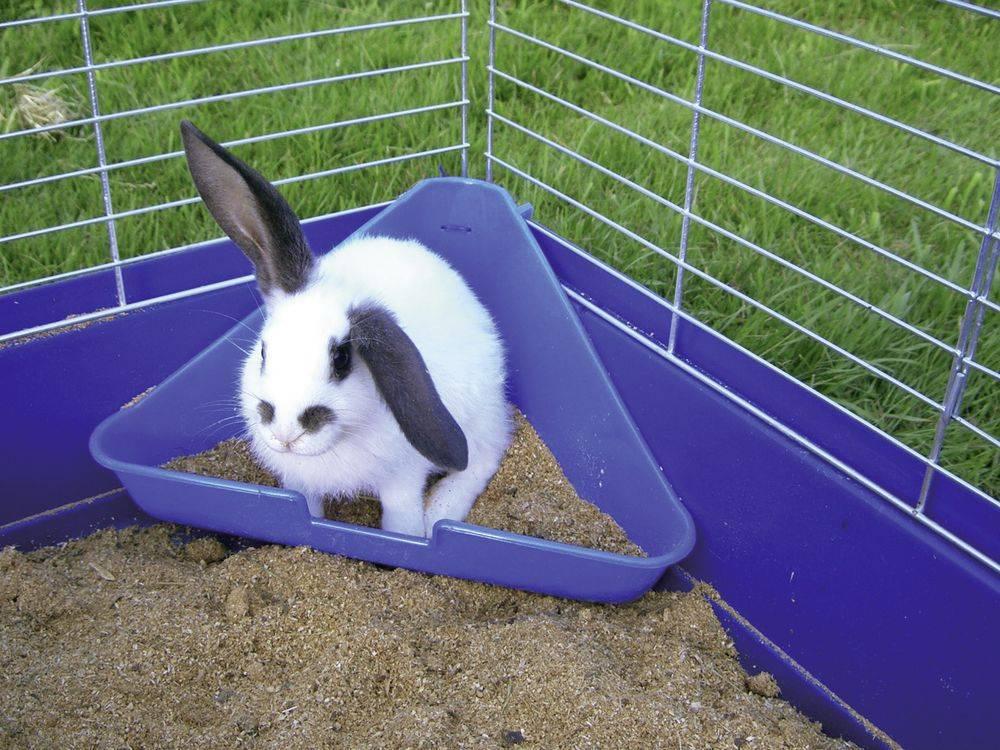 Выбираем лоток кролику и приучаем его к туалету