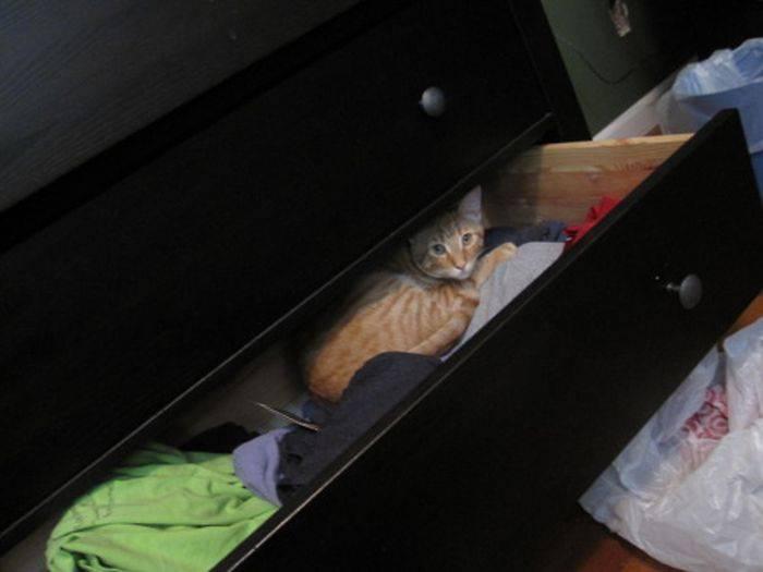 6 причин, почему кот или кошка прячется в темные места: когда можно не беспокоиться, а когда нужно