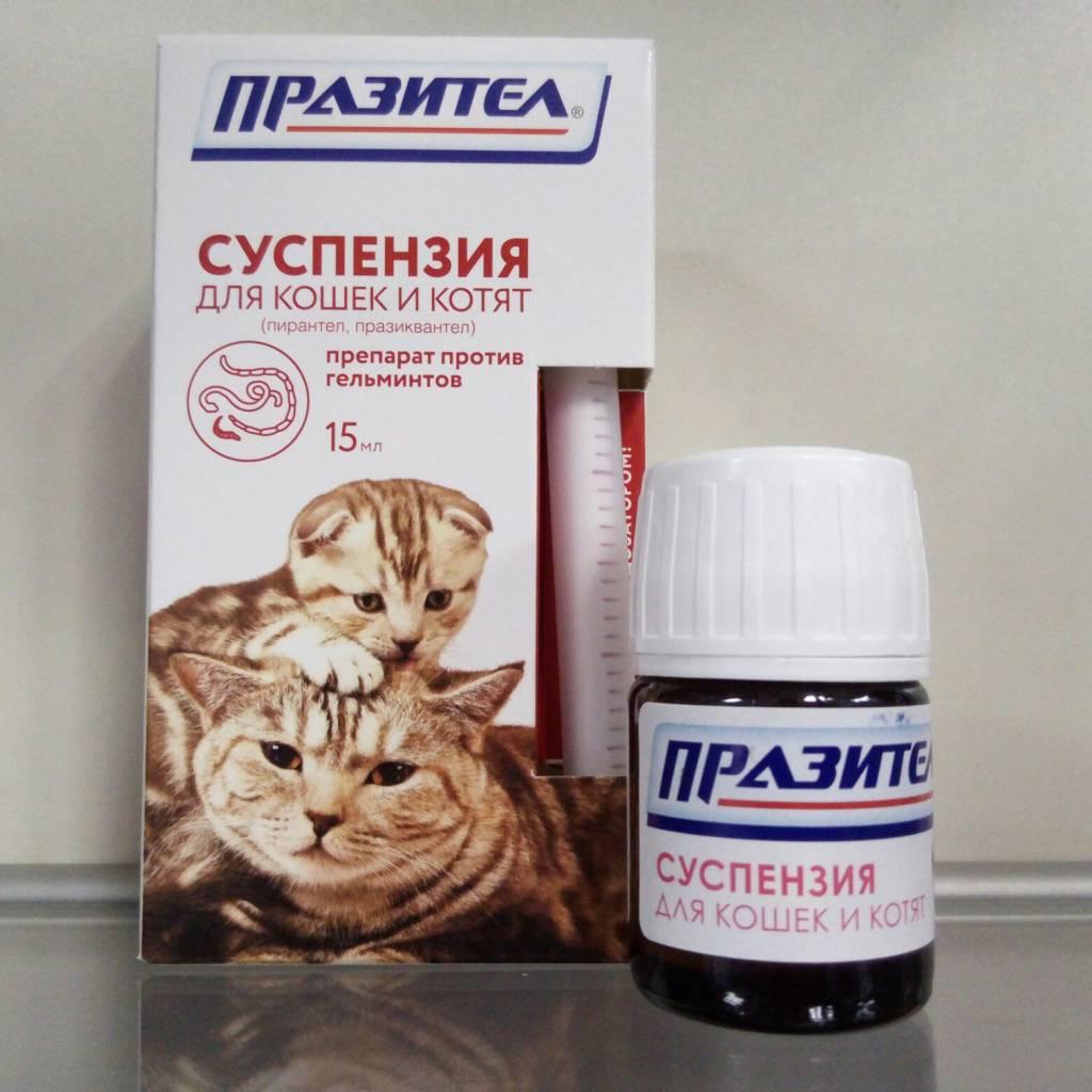 Суспензия от глистов для кошек: эффективные средства, дозировка