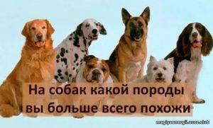 Выбор породы собаки по знаку зодиака