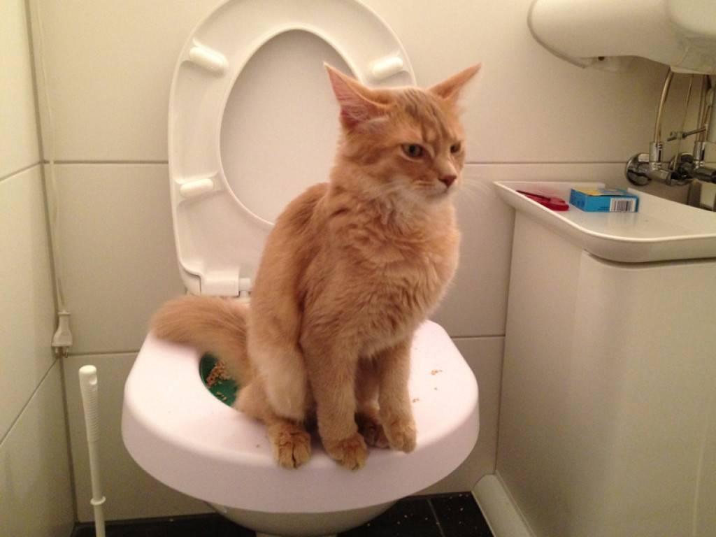 Собака писается под себя или в туалете: причины