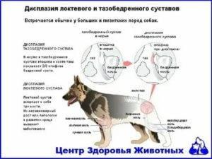 Атаксия у кошек лечение в домашних условиях | портал о народной медицине