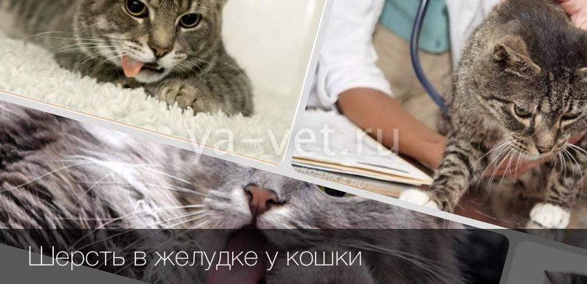 3 самые эффективные пасты для выведения шерсти у кошек из желудка