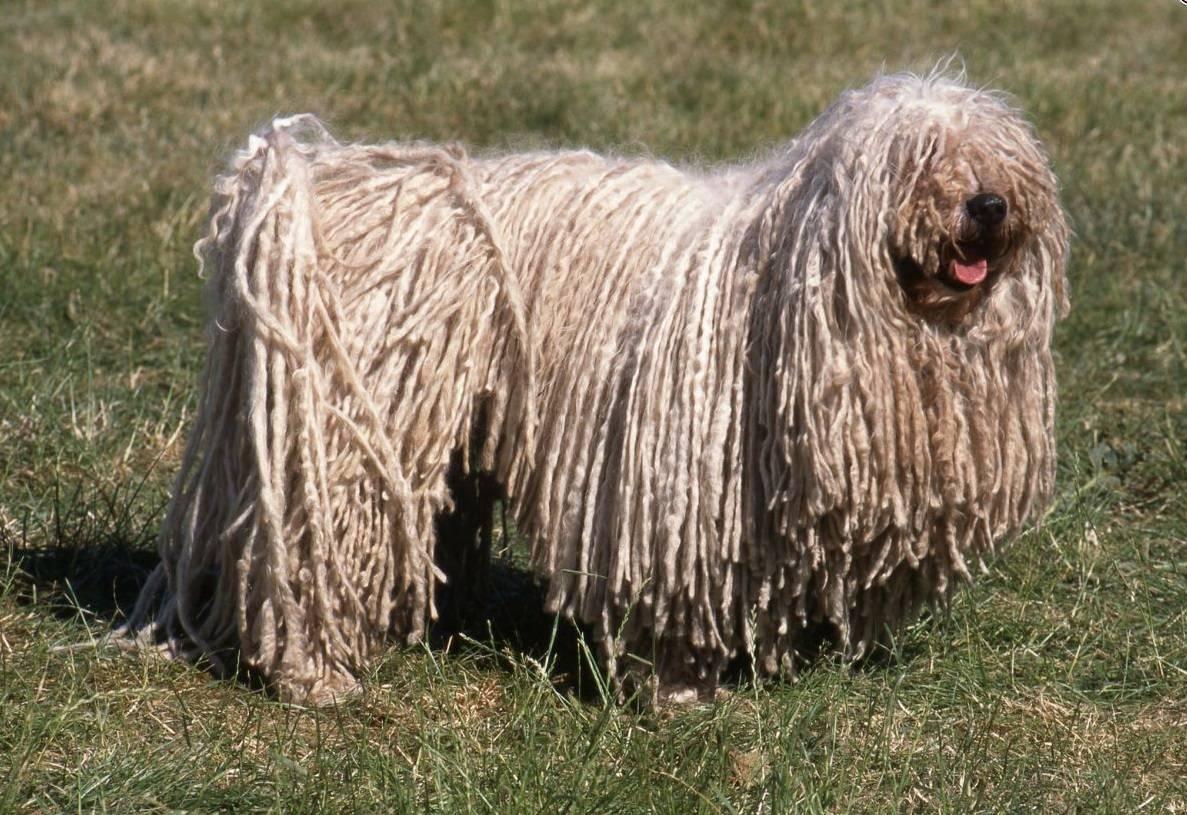 Все разновидности собак породы дог – американский, аланский, московский и другие