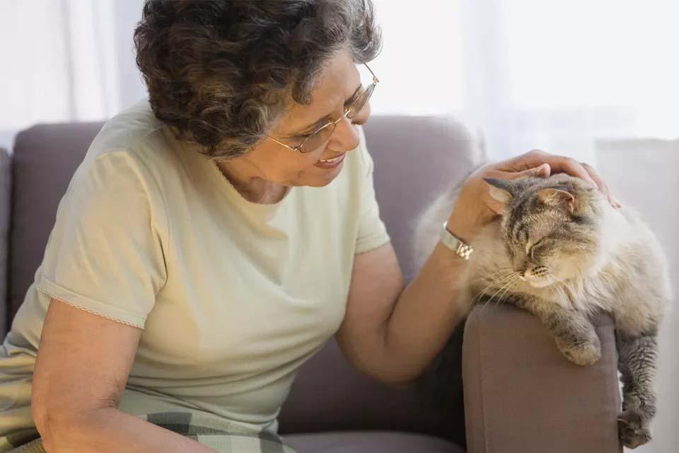 Кошачья старость — что нужно знать об уходе за стареющим животным